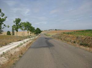 De 'weg met de bomen'.